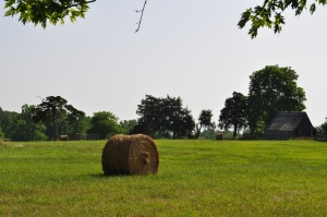 Rolled hay and surrounding forest edge and hedgerows in APCO