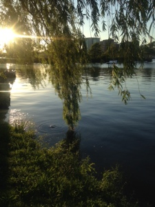 Weeping Willow dips its toes into the Charles