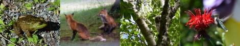 Acadia Animal Friends