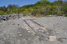 Tracks on Gallops Island, 2016
