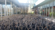 The Lynch Garden near museum's entrance designed to reflect the architecture of the new addition.