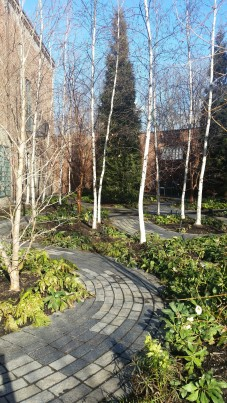 The Monk's Garden with winding paths.