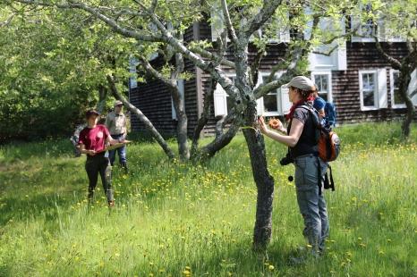 Jenny measures a cherry tree.