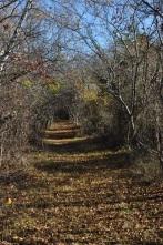 Circulation: a beautiful tree tunnel, one of my favorite trails on Peddocks