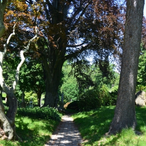 Picturesque trail and a beautiful beech
